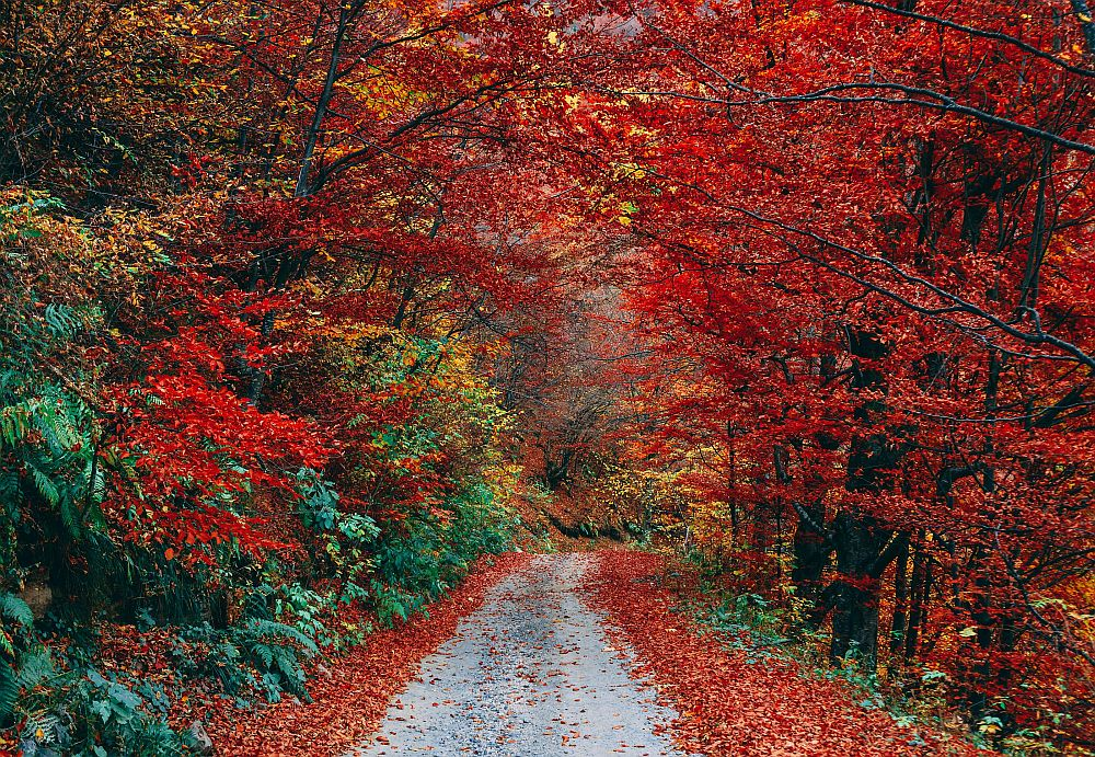 People are good, Red Autumn Woods